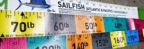 We take our sailfish fishing very seriously