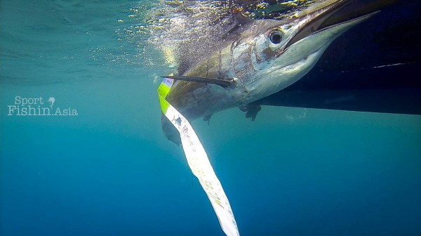 Kuala-Rompin-sailfish-measuring-length-weight-release-ruler