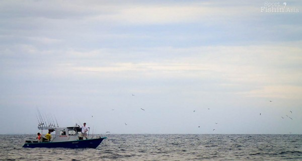 birds-boats-sailfish-kuala-rompin-fishing-charter_140828_1238