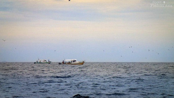boats-birds-sailfish-kuala-rompin-fishing-charter_140828_1242