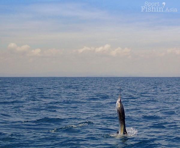 kuala-rompin-sailfish_140809_0511