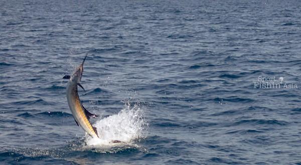 kuala-rompin-sailfish_140809_0524