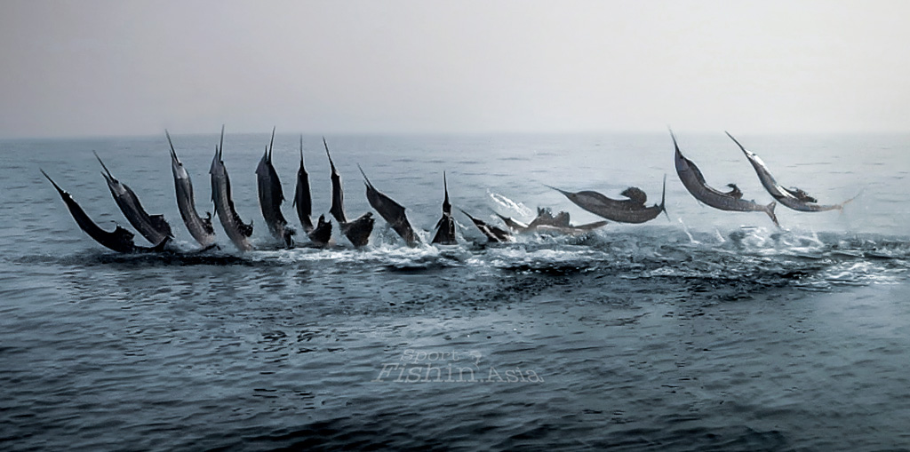 Wall Poster of Rompin Sailfish Jumping Sequence