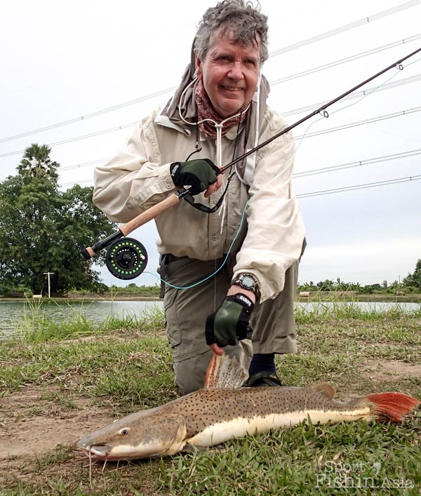 Bob managed to land a rare hybrid amazon redtail shovelnose tiger catfish