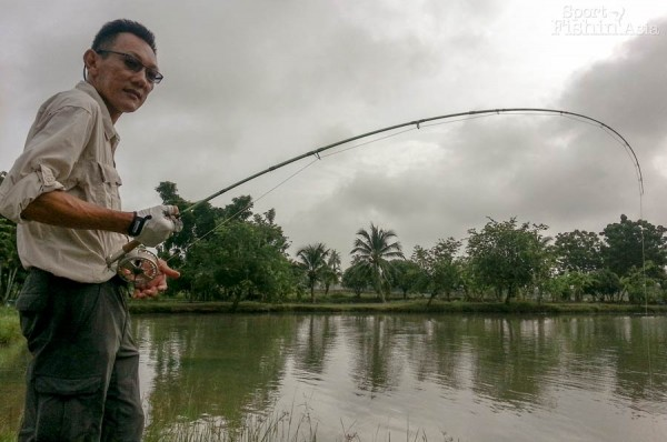 fly-fishing-amazon-bkk-it-monster-lake-thailand_140821_1171