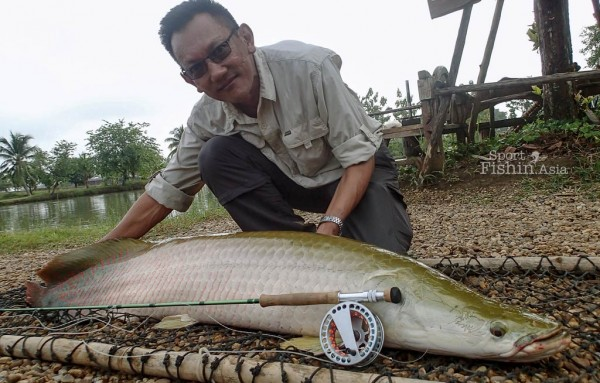 This arapaima is estimated to weigh between 40-50kg (88-110 pounds). Landed on a 10 weight. If you a better looking photo with your arapaima, you need to get into the water.