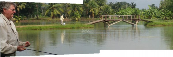 Roughly 2/3 of the pond is separated by a wooden bridge and yes, the big arapaima knows how to make use of it.