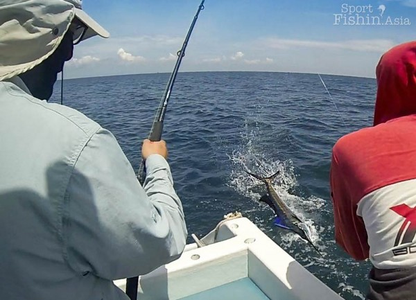 Leadering the sailfish