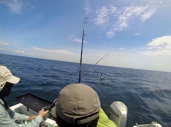 Crossing swords. Can you guess which rod is that jumping sailfish on?