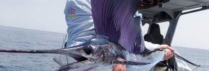 Birthday Bash Billfish