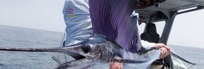 Kuala-Rompin-sailfish-andrew-760
