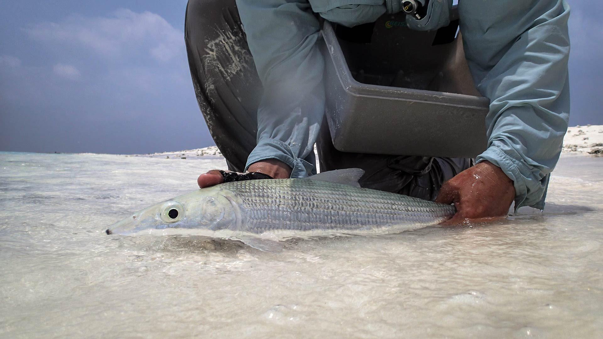 bonefish-maldives-fly-fishing_150323_7529-2