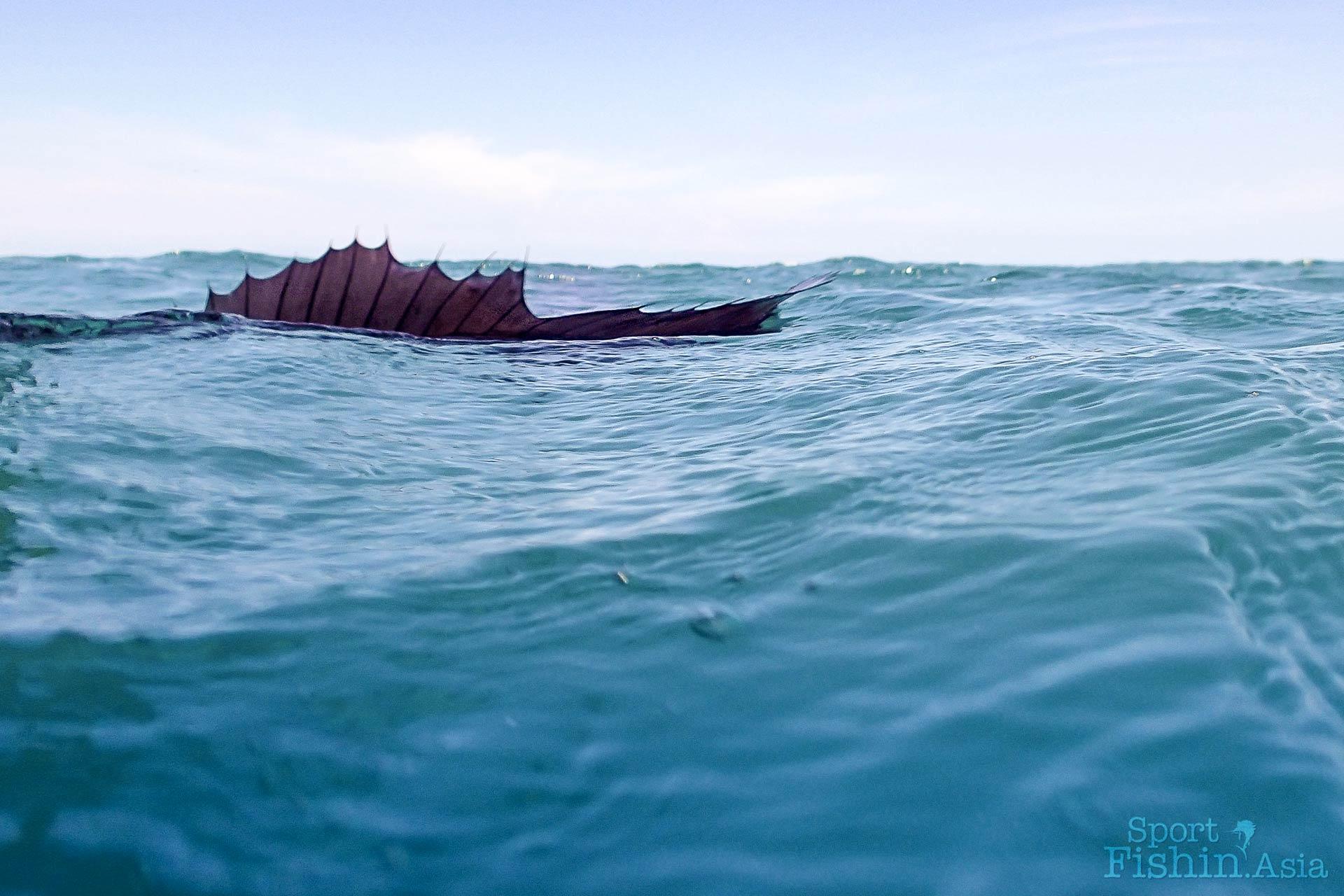 Sail-fin