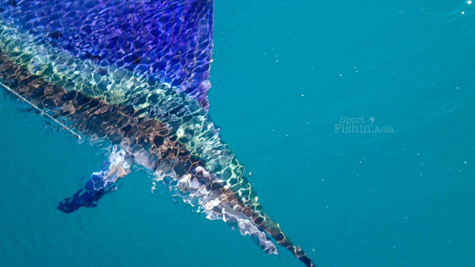 sailfish-underwater