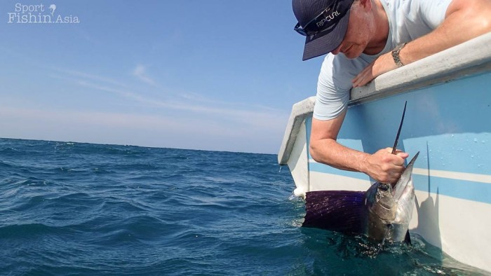 Michael releases another sailfish