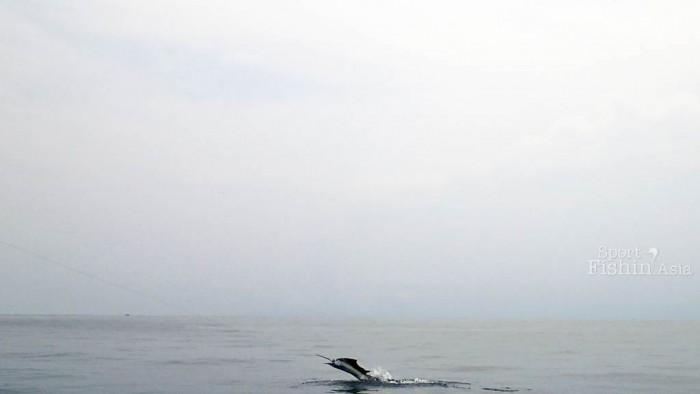 kuala-rompin-sailfish-fishing-charter_141015_2987