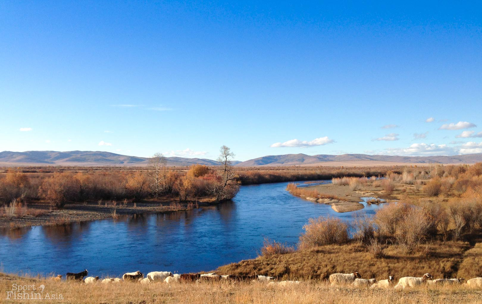 Beautiful Mongolia autumn landscape river scenery