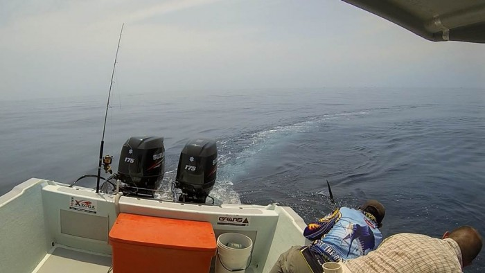 reviving-Kuala-Rompin-sailfish