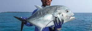 maldives-giant-trevally-din-2015_-(4)