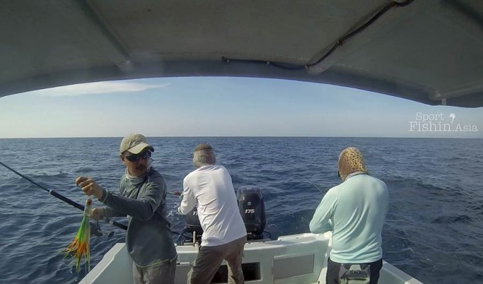 fly-fishing-sailfish-Kuala-Rompin-teasing