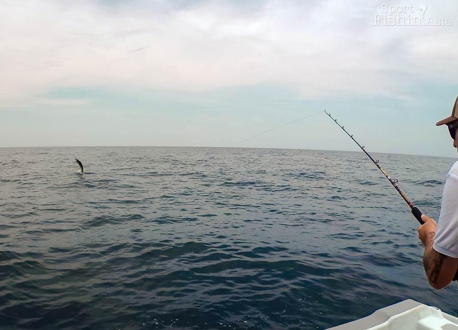 how to catch garfish youtube