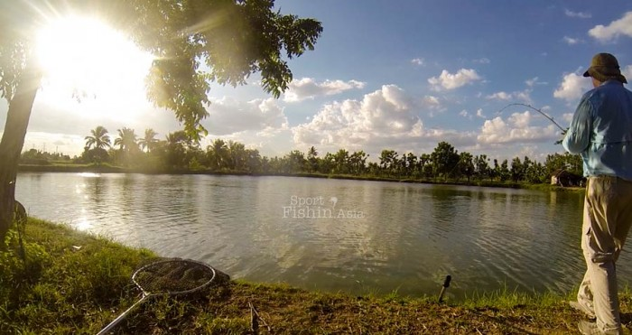 amazon-bkk-arapaima-pond-bangkok-bob-20150602-(3)
