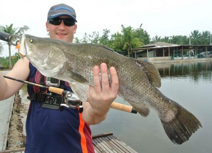 barramundi-sw-jurassic-saltwater-fishing-pond-malaysia-20150624-(20)