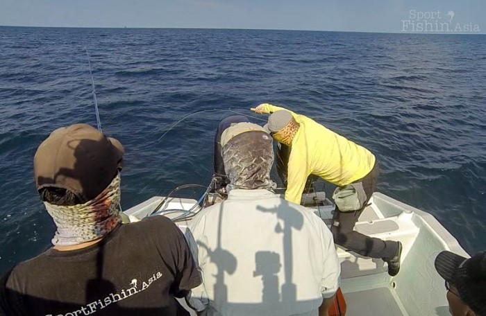 double-hookup-fly-fishing-rompin-sailfish