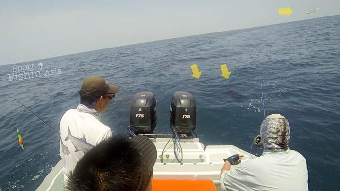 fly-fishing-rompin-sailfish-dron-20150824-(3)