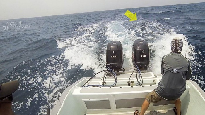 fly-fishing-rompin-sailfish-dron-20150824-(6)