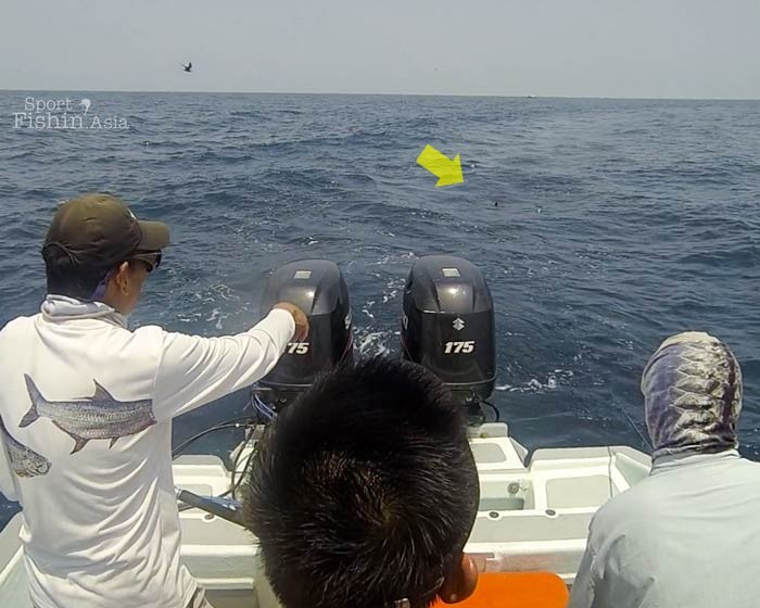 fly-fishing-rompin-sailfish-dron-20150824-(7)
