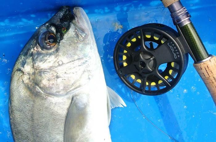 giant-trevally-sw-jurassic-saltwater-fishing-pond-malaysia-20150624-(18)