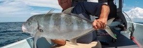 Big Orange-Spotted Trevally