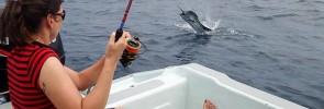 penn-clash-6000-sailfish-rompin-andre-eli