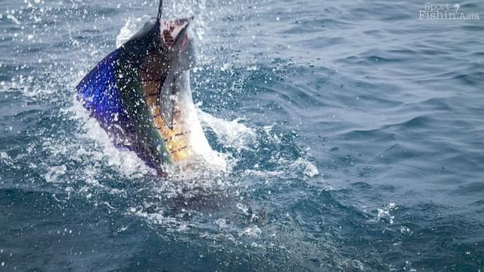 sailfish-jump-rompin-ary_150827_2714
