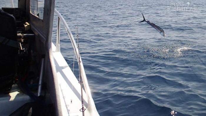 sailfish-kuala-rompin-fly-fishing_141030_4332