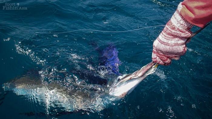 sailfish-kuala-rompin-fly-fishing_141030_4387