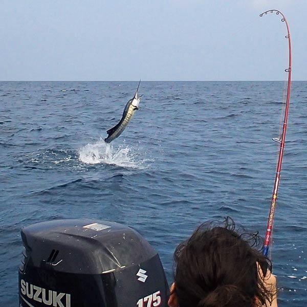 sailfish-rompin-andre-elizabeth_150811_0955