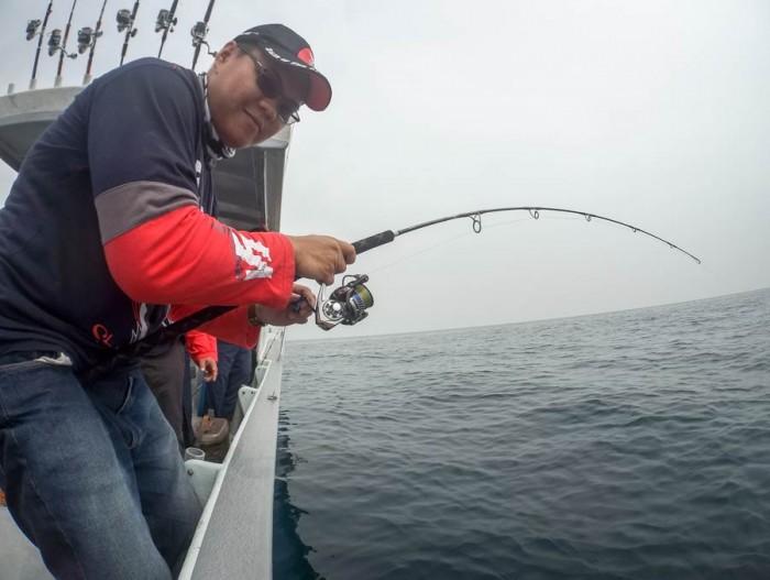 sailfish-rompin-ary-150827_3100
