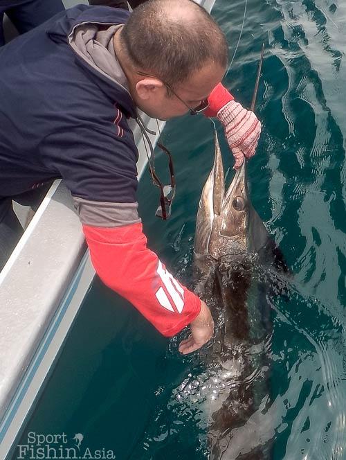 sailfish-rompin-ary-150827_3139