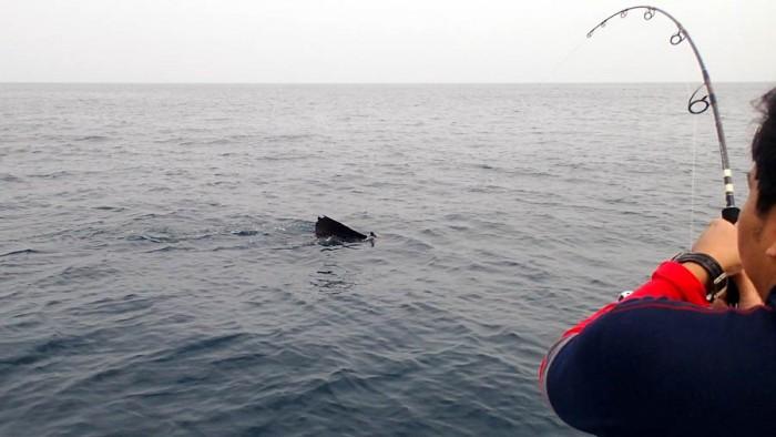 sailfish-rompin-ary_150827_2736