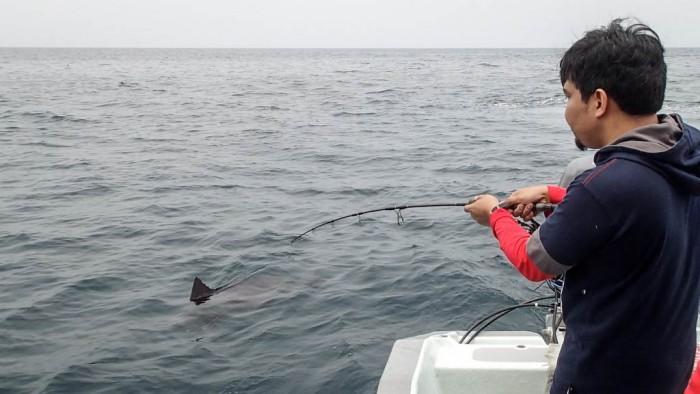 sailfish-rompin-ary_150827_2891