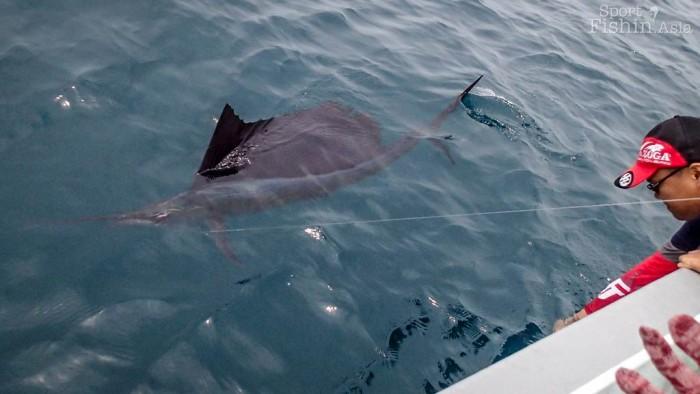 sailfish-rompin-ary_150827_2908