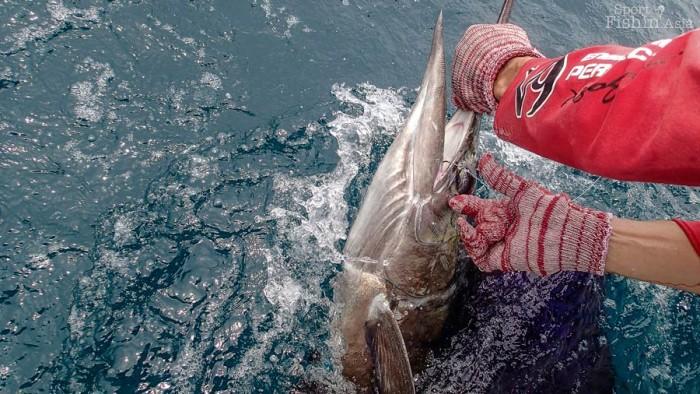 sailfish-rompin-ary_150827_2919