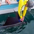 sailfish-rompin-barry-release-760