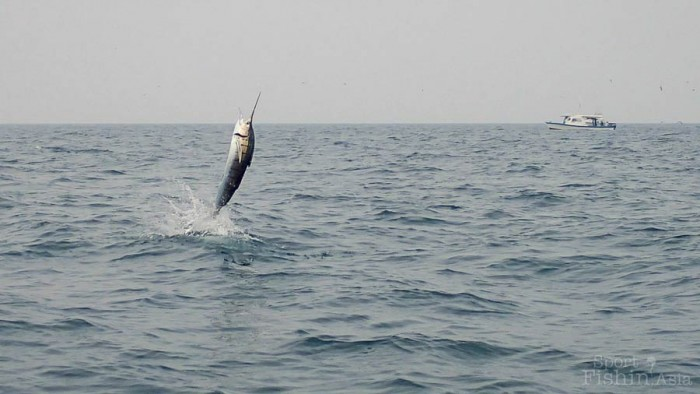 sailfish-rompin-barry_150908_3796