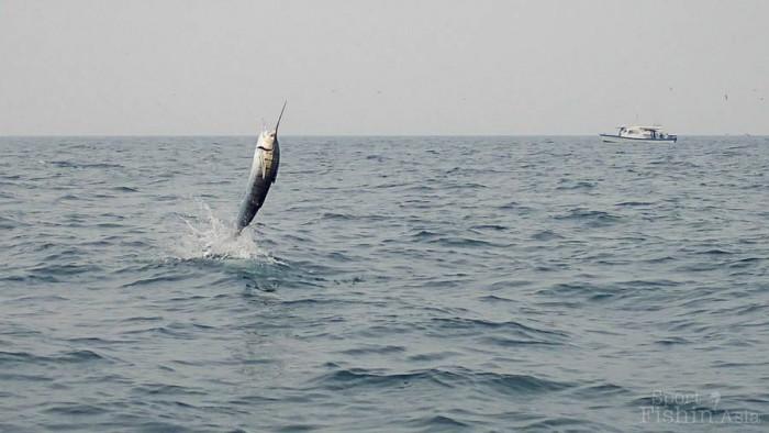 sailfish-rompin-barry_150908_3796