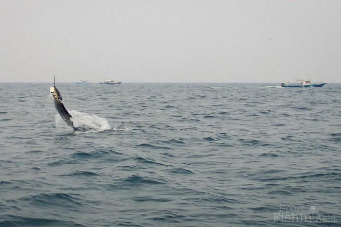 sailfish-rompin-barry_150908_3802
