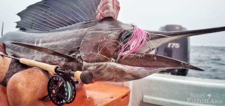 Video by Tim: Sailfish On Fly