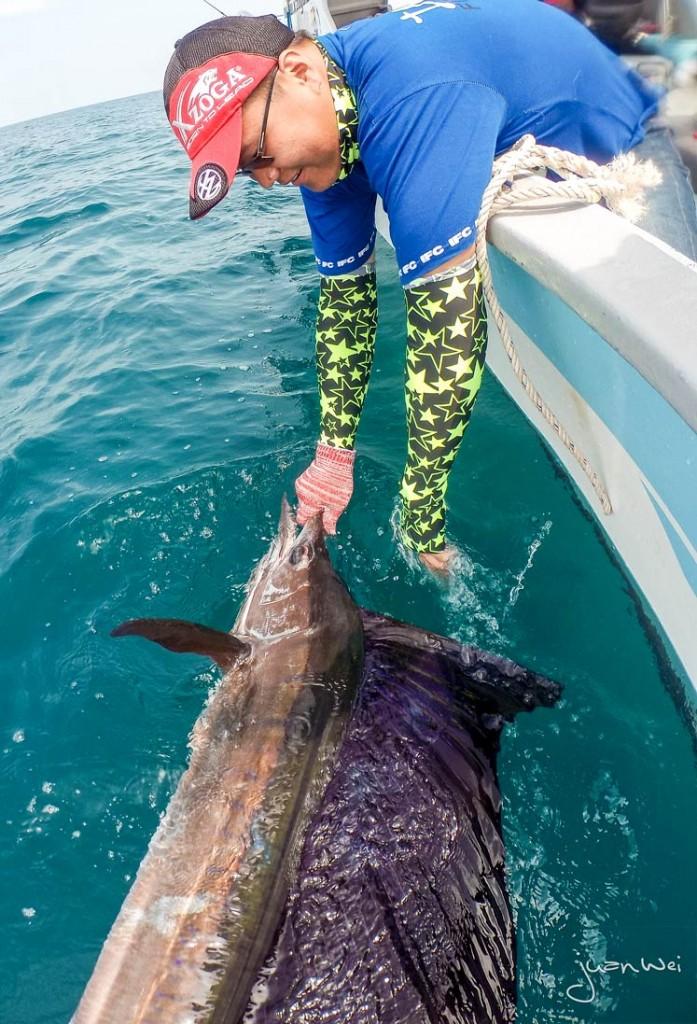 sailfish-rompin-ary-20150828-(9)